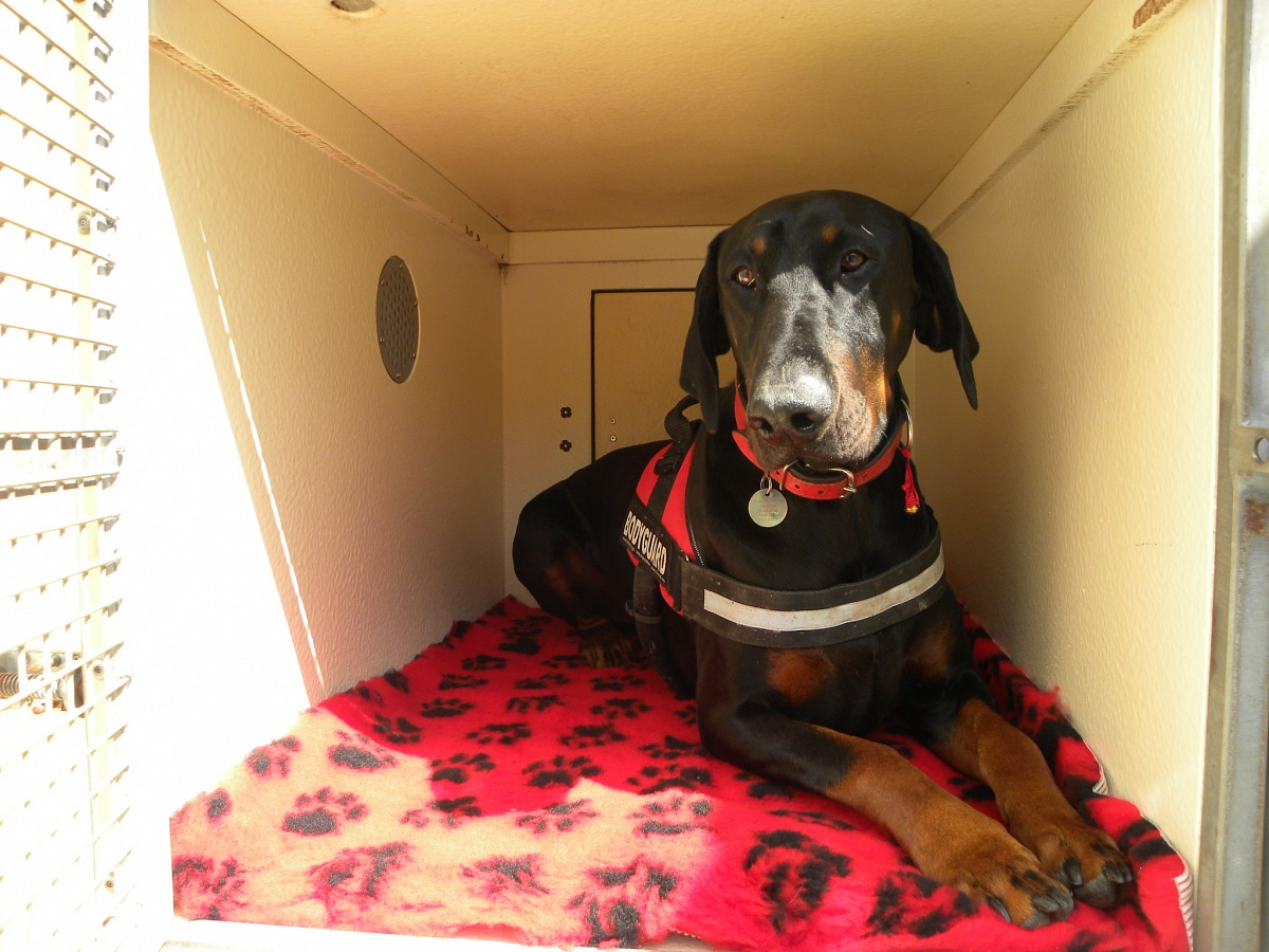 Pet Transport By Road Across The Uk Europe C Four Paws Calagran