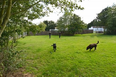2 Acre play paddock
